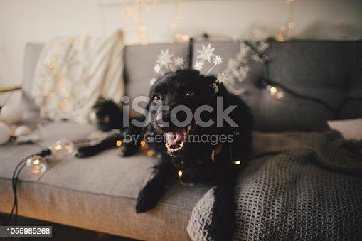Photo of cute dog lying on sofa and waiting for Christmas