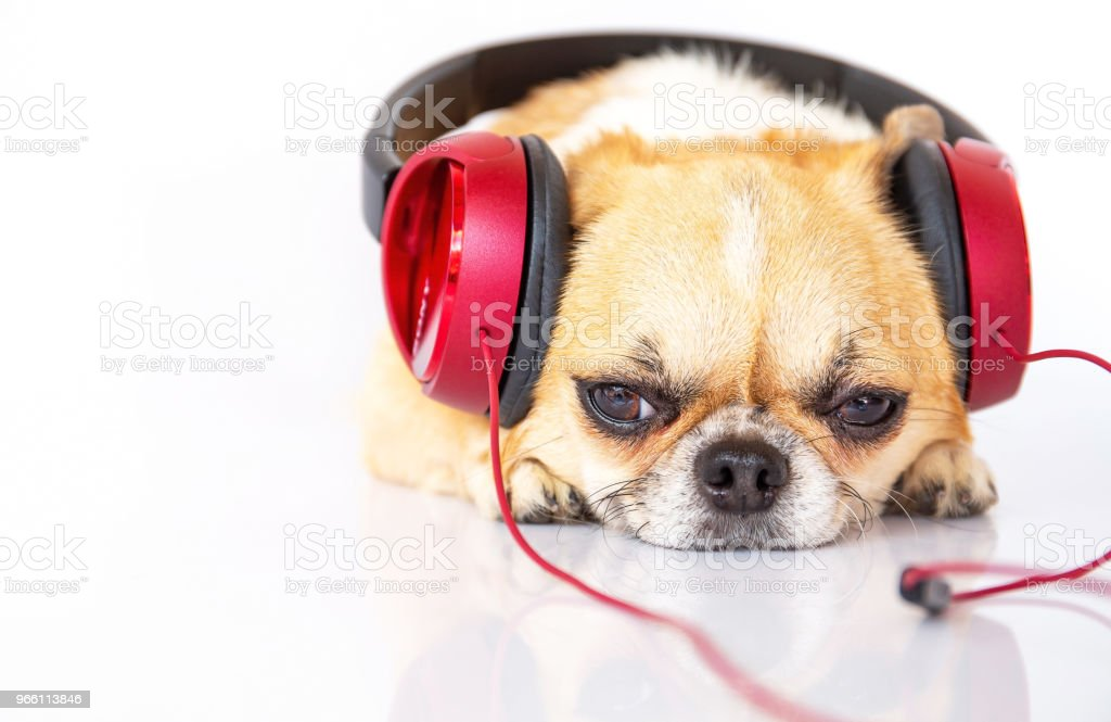 Cute dog listening music - Royalty-free Animal Stock Photo