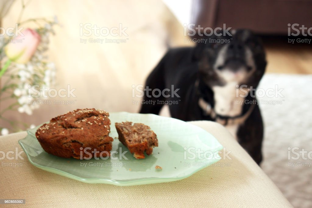 A cute dog looking at food on a plate stock photo