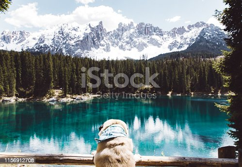 Small fluffy pug in bandana enjoying a view of beautiful turquoise mountain lake, pine forest and the Alps in Italy during sunny summer day