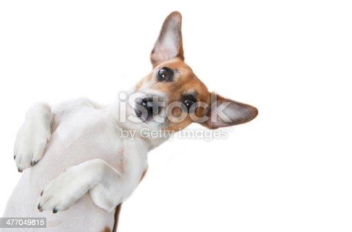 istock Cute Dog looking 477049815