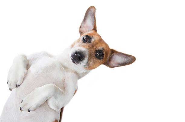 Cute dog looking picture id477049815?b=1&k=6&m=477049815&s=612x612&w=0&h=b5azore8lrngzo5rkyutsuhk0bwbgrqmw4ty12iarra=