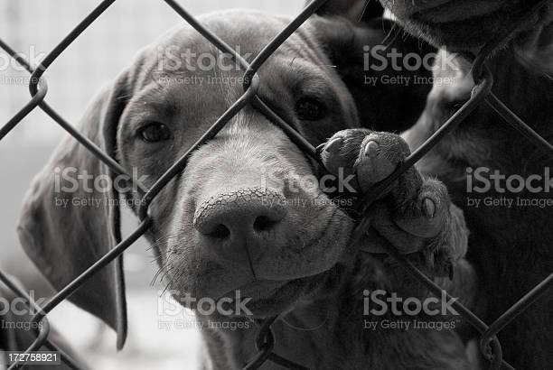 Cute dog needing to be saved behind a fence picture id172758921?b=1&k=6&m=172758921&s=612x612&h=rdpj  dm2qhumlyyafutuf41mv zlgd3t kb6k6w1tw=