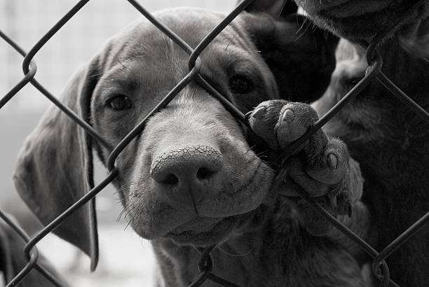 A cute dog needing to be saved behind a fence stock photo