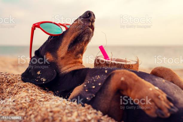 Cute dog of dachshund black and tan buried in the sand at the beach picture id1174766953?b=1&k=6&m=1174766953&s=612x612&h=cbhfvszecldjgow2l uey qnjimlvkn1hwswvikenvi=