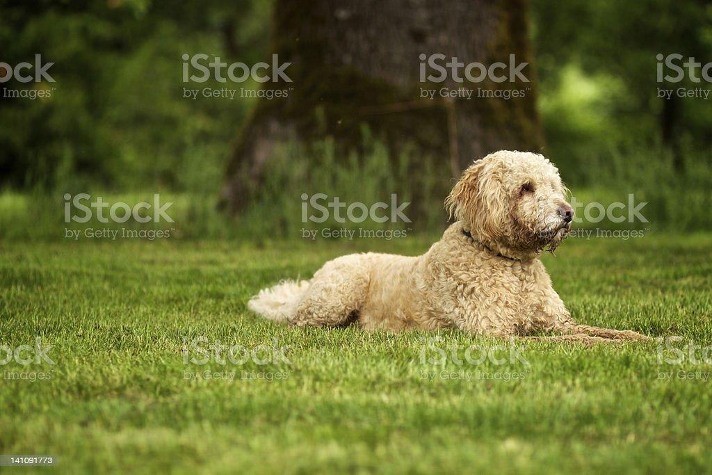 Cute Dog on Green Grass stock photo