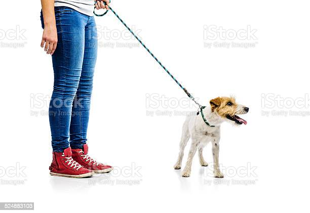 Cute dog on lead on walk with his owner picture id524883103?b=1&k=6&m=524883103&s=612x612&h=edt8lkfvt99i4tiwgnsvf34jwckiyi2jmpo3kaafpm8=
