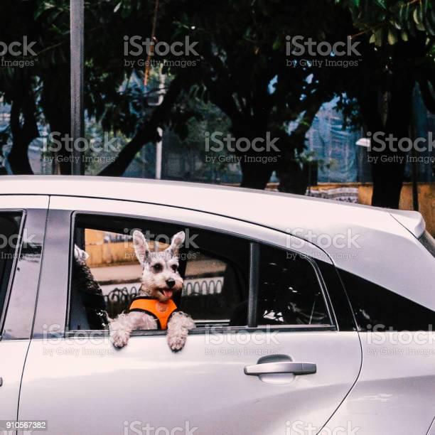 Cute dog on open window picture id910567382?b=1&k=6&m=910567382&s=612x612&h=gexu2mghhonvs0fhpmixzdorwrxfnn4aplluh4fiquo=
