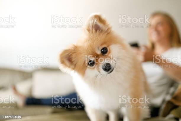 Cute dog on sofa with woman on background picture id1152439648?b=1&k=6&m=1152439648&s=612x612&h=ewqltbc2x0aukb cvnjirnhmfrql1zzzi4lufpiiq88=