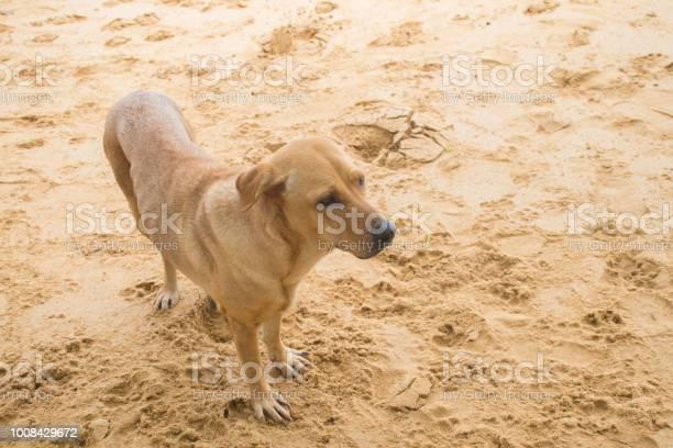 Cute dog on the beach picture id1008429672?b=1&k=6&m=1008429672&s=612x612&h=l76bolt zarvvzjbkgr3kabgllxs6bklpnladt1p5ek=