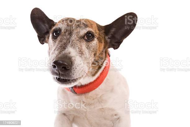 Cute dog picture id174909221?b=1&k=6&m=174909221&s=612x612&h=ffjde9zz3cih5mjjuzxm0lmpjiokkjmks0esws1vlzq=
