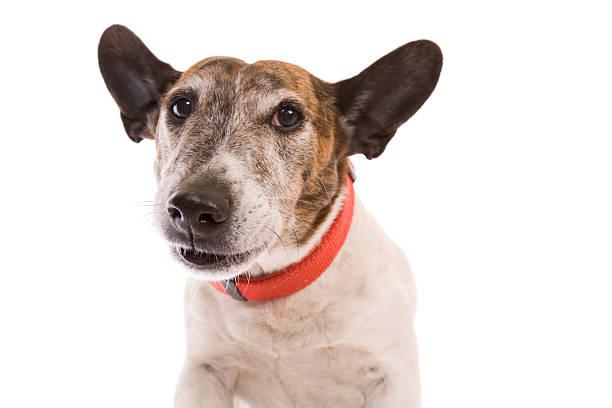 Cute dog picture id174909221?b=1&k=6&m=174909221&s=612x612&w=0&h=r7ms6ii5evmkfrjzgo0azbmc1erqs 8nl7gjuslp4gm=