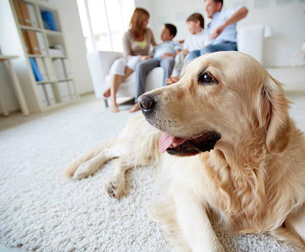 mignon chien - canidés photos et images de collection