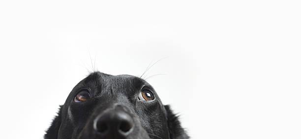 Cute dog picture id533229488?b=1&k=6&m=533229488&s=612x612&w=0&h=zsy hwtwrwsyruz5u15n6xldkixsy0kvprlbsuxsxhu=