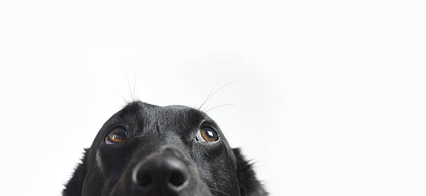 Cute Dog stock photo