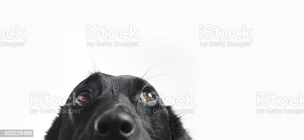 Cute Dog Isolated on white
