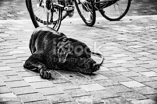 533229488 istock photo Cute Dog 654578488