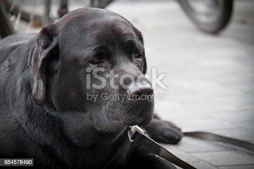 533229488 istock photo Cute Dog 654578490