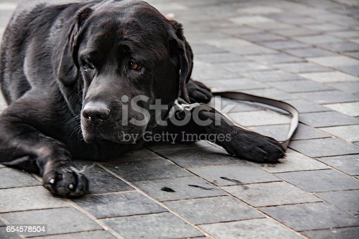 533229488 istock photo Cute Dog 654578504