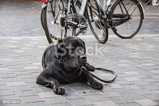 533229488 istock photo Cute Dog 654578514