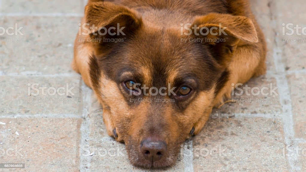 Cute dog royalty-free stock photo