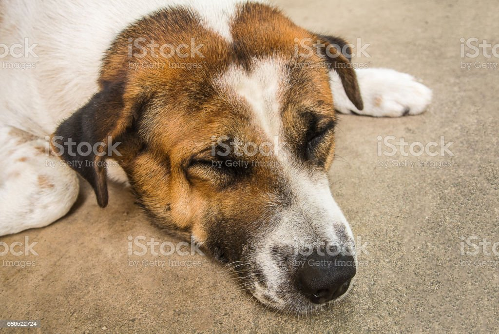 Cute dog foto stock royalty-free