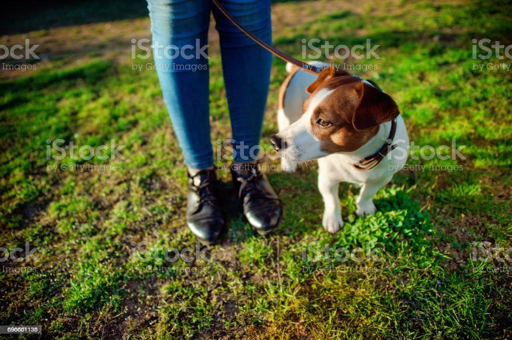 Cute dog playing near woman legs stock photo