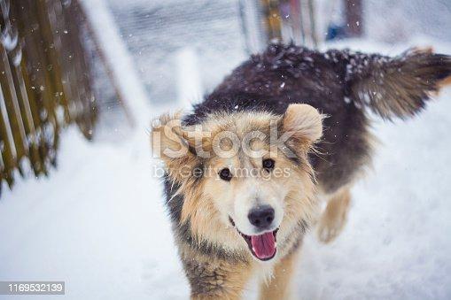 cute dog portrait in winter scene. focus on the eyes