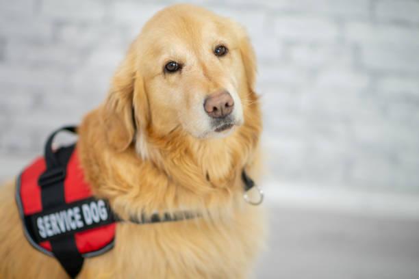 niedlichen hund portrait - dressierter hund stock-fotos und bilder