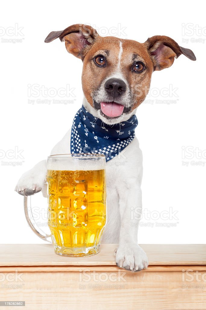 Cute dog posing with a full mug of beer royalty-free stock photo