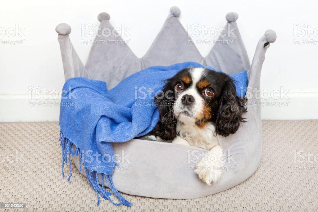 Cute dog relaxing stock photo
