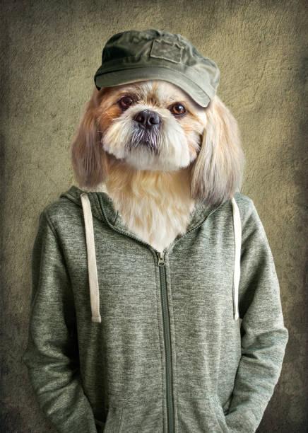 retrato de shih tzu cachorro fofo, vestindo roupas humanas, sobre fundo vintage. cão de hipster - cachorro desenho - fotografias e filmes do acervo