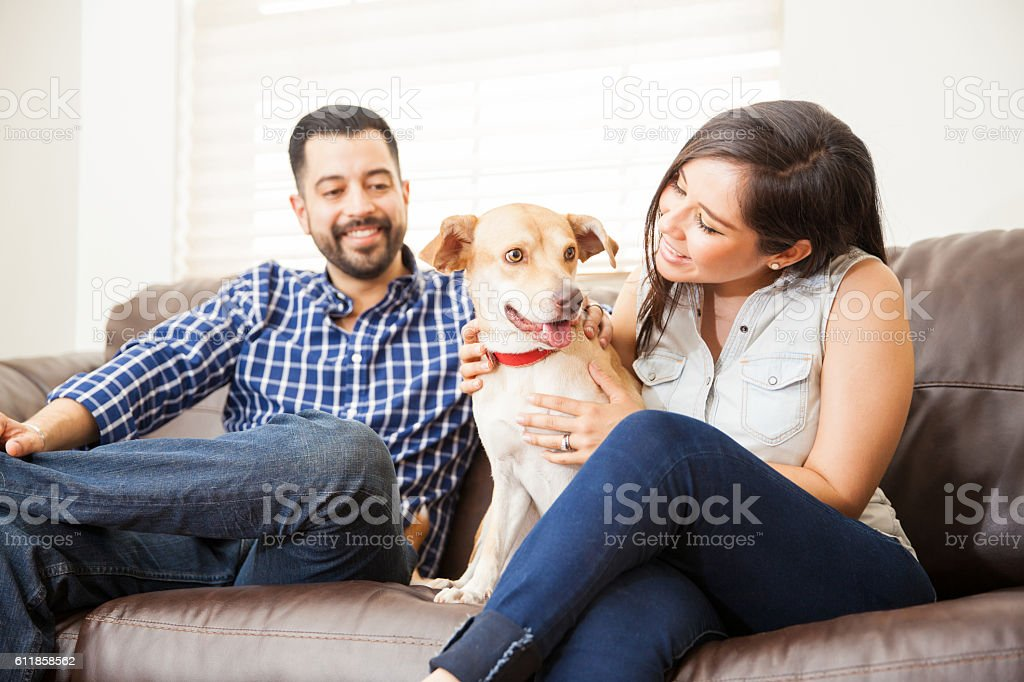 Cute dog sitting in a couch at home stock photo