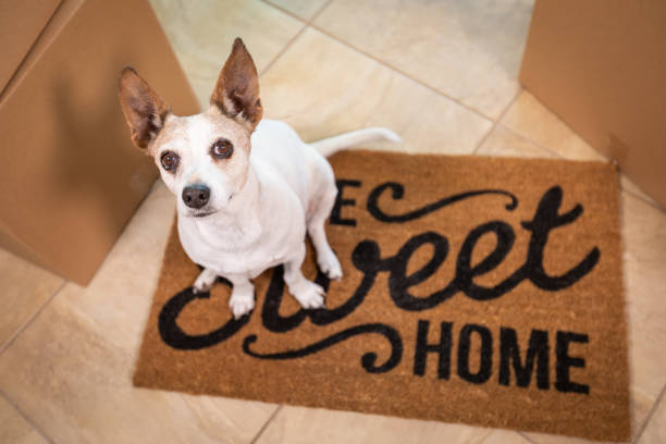 Cute Dog Sitting on Home Sweet Home Welcome Mat on Floor Near Boxes stock photo