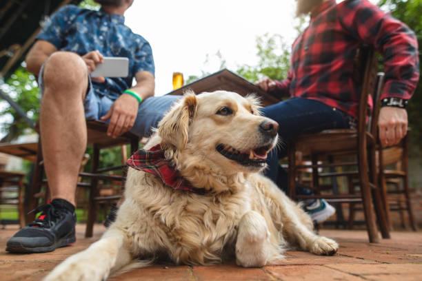 Niedlicher Hund sitzt mit seinem Besitzer in einer örtlichen Bierbrauerei – Foto