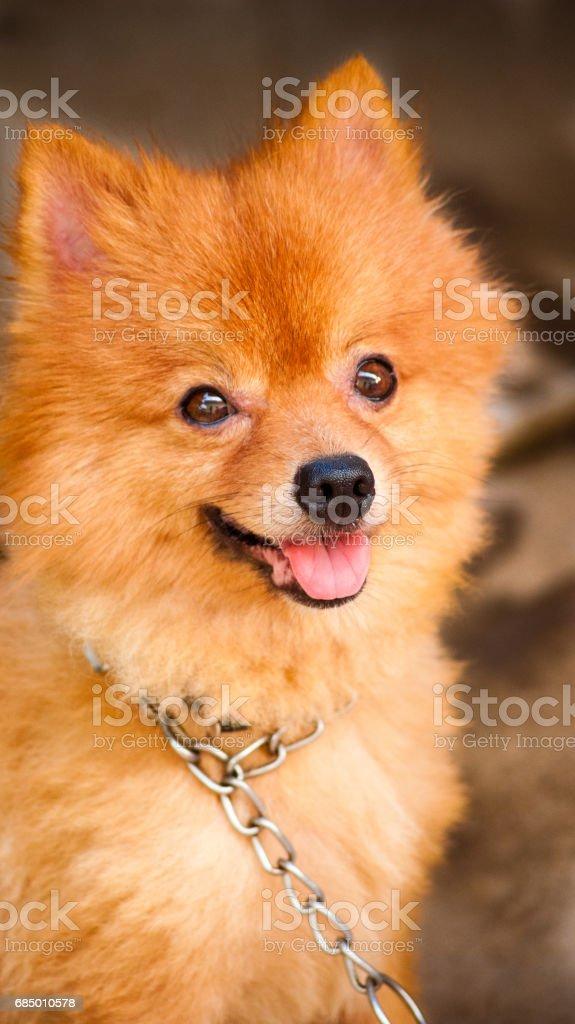 cute dog smile Lizenzfreies stock-foto