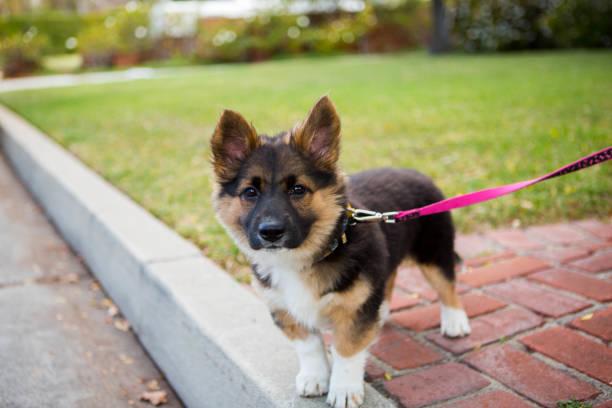 Cute dog standing on front yard picture id1013326936?b=1&k=6&m=1013326936&s=612x612&w=0&h=3 5ukqwwk2pu kyf2v5pyxbmh4 jlytiu qvc j5yuw=