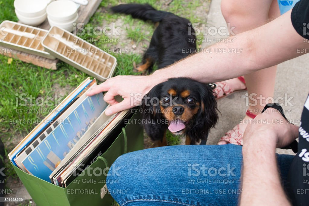 Cute dog stands near owner at a community yard sale stock photo