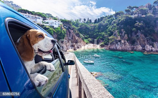 istock Cute dog travels in car to the sea 638640754