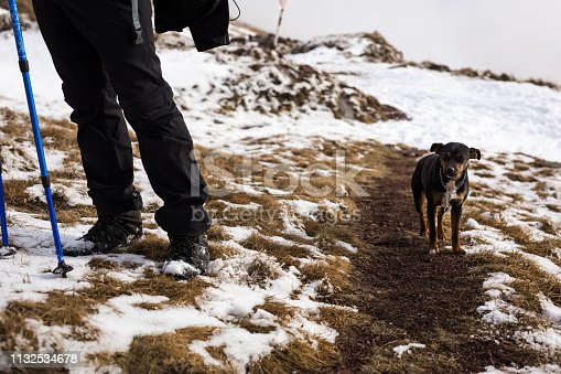 istock Cute dog walk near man`s legs 1132534678