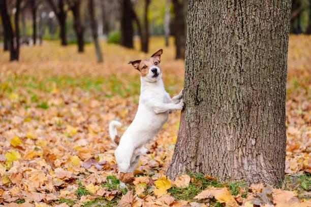 Pattes de chien mignon à marcher à l'automne debout parc sur hind - Photo