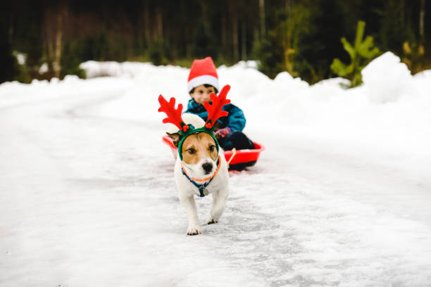 Cute dog wearing costume of christmas reindeer and santa clause in picture id1173589672?b=1&k=6&m=1173589672&s=612x612&w=0&h=fjglcpamrbridcohhmlaqgnwnfyrj7cayqurwvek3po=