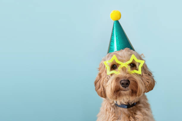 parti şapkası ve gözlük takan sevimli köpek - ruth stok fotoğraflar ve resimler