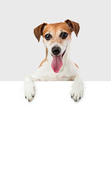niedlich hund weißen teller - coole liebessprüche stock-fotos und bilder
