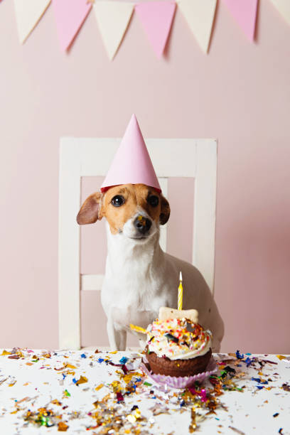 Cute dog with a party hat celebrating her birthday stock photo