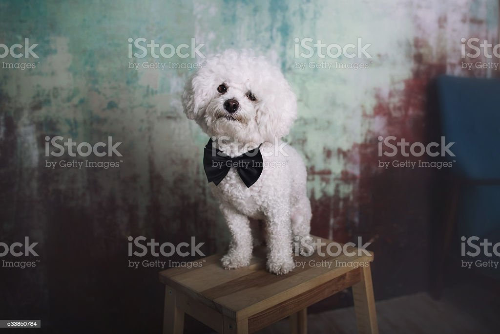 Cute dog with butterfly stock photo