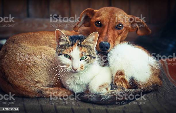 Cute dog with cat love picture id473288744?b=1&k=6&m=473288744&s=612x612&h=iigwc9m0ba0ja51a rl4safe8qzynt2bexscbe7qjdo=