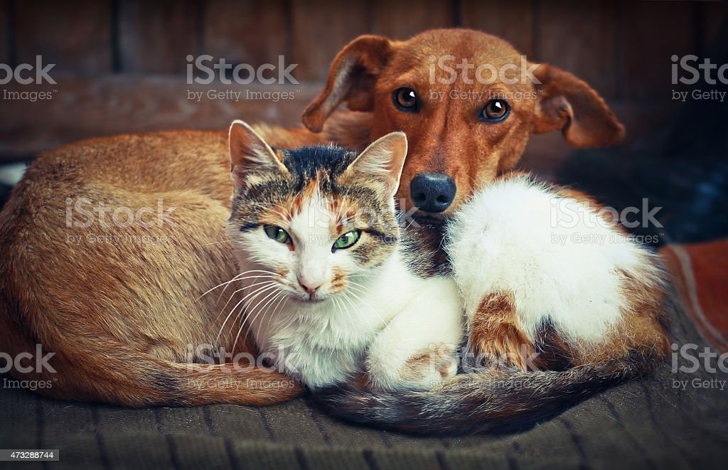Cute dog with cat. Love stock photo