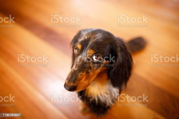 Cute dog with guilty face picture id1190284847?b=1&k=6&m=1190284847&s=612x612&h=svvls al 2z78hezibq87qxwn7nix7kjkkfooi9zg9m=