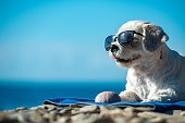 Cute Dog With Sunglasses Relaxing on Coastline.